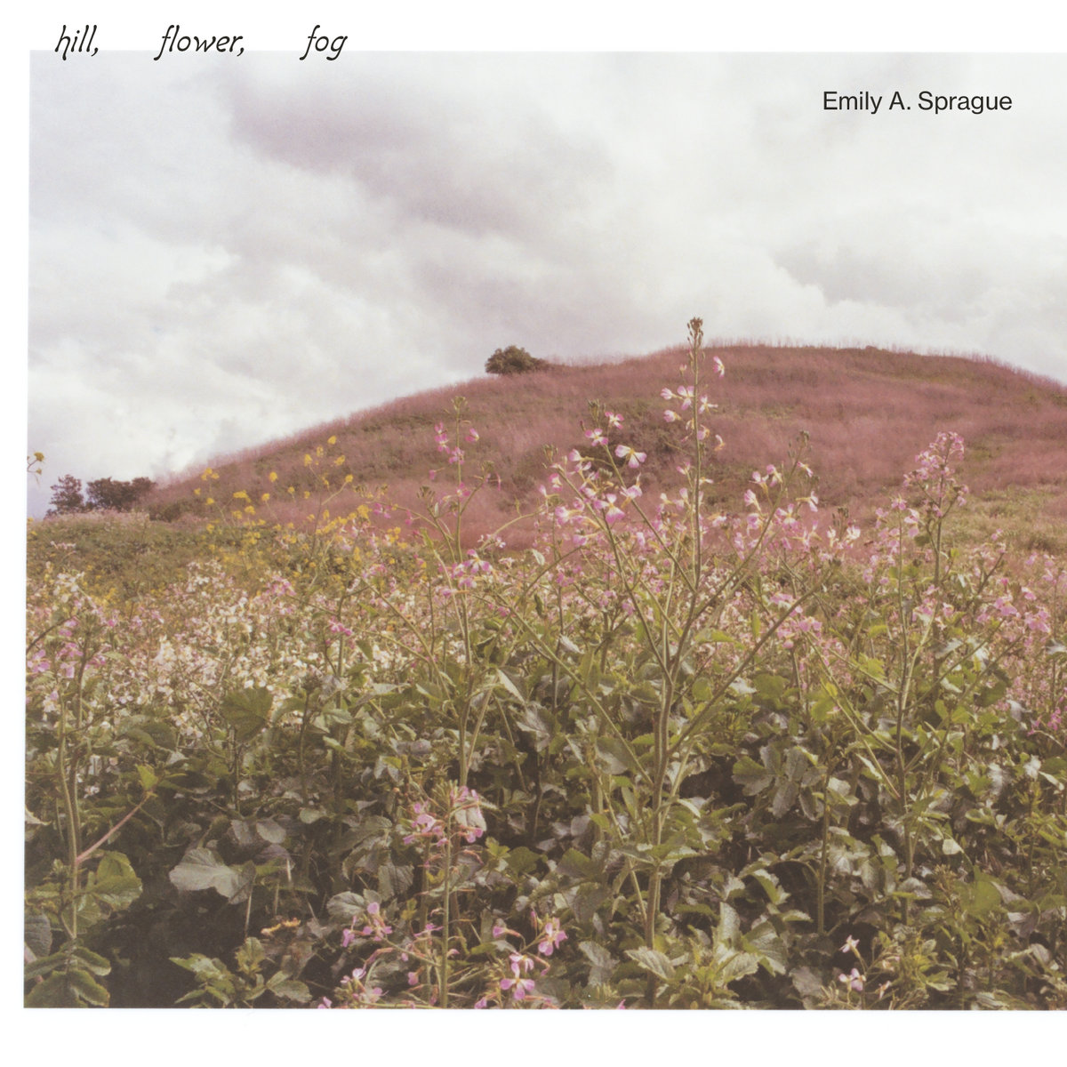 The cover of the album Hill, Flower, Fog by Emily A. Sprague. A green hill is pictured, loosely covered in small purple flowering plants, with an overcast cloudy sky.